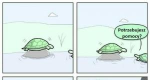 Żółwia pomoc