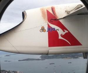 Oślizgły pasażer na gapę
