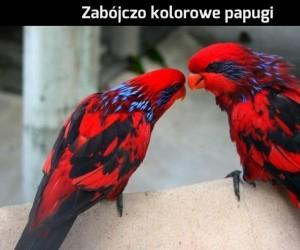 Papugi dla graczy