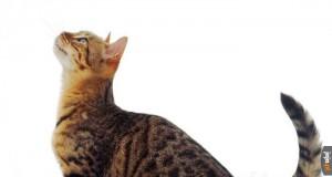 Na co ten koteł tak paczy?