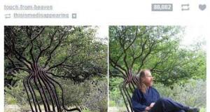 Osiem lat poszło w drzewo