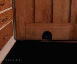 Kot, który myśli, że jest myszą