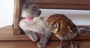 Kot i sowa