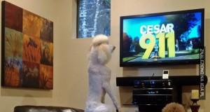 Ulubiony psi program