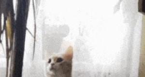 Koteł dinożarł