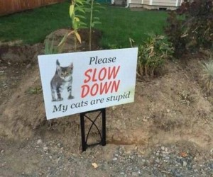 Proszę, zwolnij, moje koty są głupie!