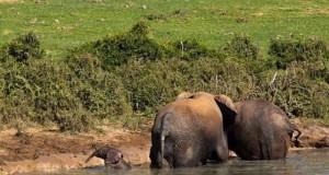 Na ratunek małemu słonikowi