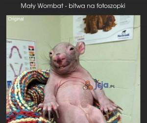 Mały Wombat - Bitwa na fotoszopki