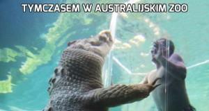 Tymczasem w australijskim ZOO