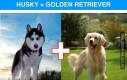 Krzyżowanie ras psów