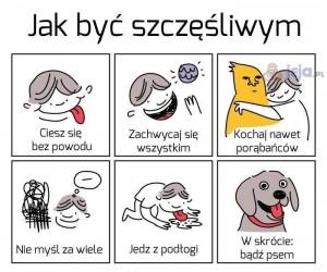 Jak pies i kot