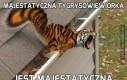 Majestatyczna tygrysowiewiórka