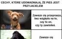Kilka faktów o psach