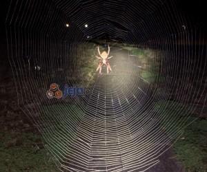 """Chyba za dużo """"Władcy Pierścieni"""", panie pająku..."""