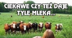 Ciekawe czy też daje tyle mleka...