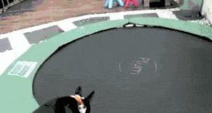 Pies pokochał nową trampolinę
