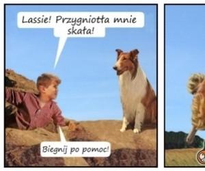 Lassie biegnij po pomoc