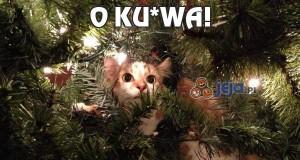 O ku*wa!