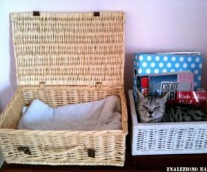 Mieszkanko kociaka