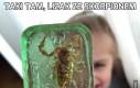 Taki tam, lizak ze skorpionem