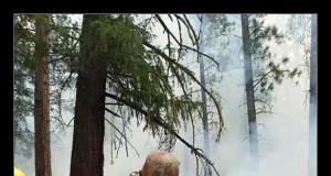 Nie dziwne, że praca strażaka jest tak ceniona