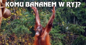 Komu bananem w ryj?