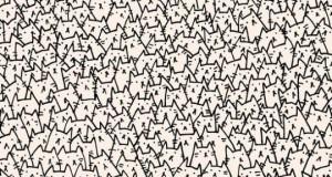 Znajdź psa!
