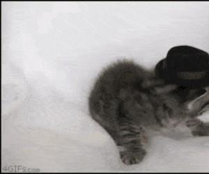 Nie znoszę tego kapelusza