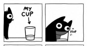 Nie możesz pić z miski?!