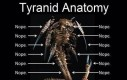 Anatomia tyranida