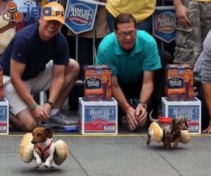 Wyścigi hot-dogów
