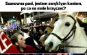 Biedny koń