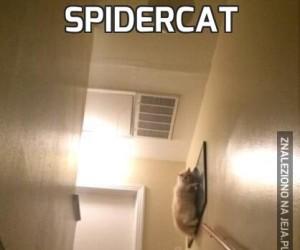 Spidercat