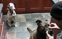 Psia współpraca
