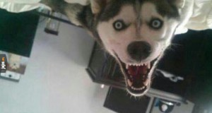 Nowy smile dog