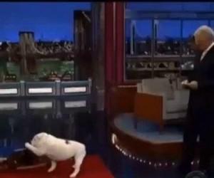 Pies wyzwolony
