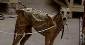 Ej, to mój psiak!