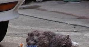 Martwy kot?