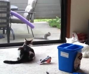 Wiewiórczy refleks