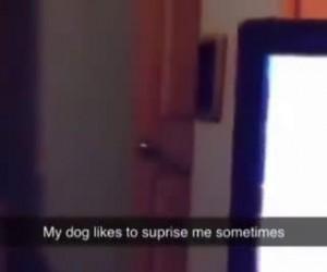 Pies pełen niespodzianek