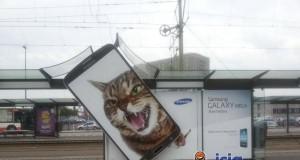 Koci marketing