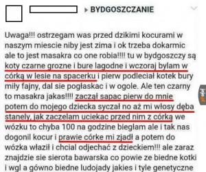 Uwaga, koty ludojady grasują w Bydgoszczy!
