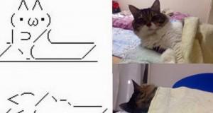 Kot ze znaków i prawdziwy kot