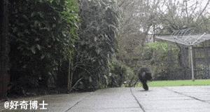 Dwunogi koteł