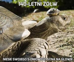 140-letni żółw