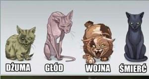 Koty w niektórych przypadkach są podobne do ludzi