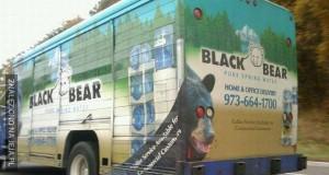 Groźny niedźwiedź o dziwnych oczach