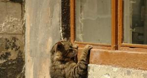 Widzę Cię!