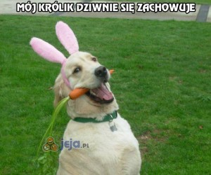 Mój królik dziwnie się zachowuje
