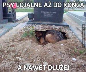 Psy lojalne aż do końca
